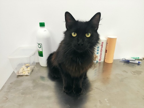 Adriana is looking for a home.
