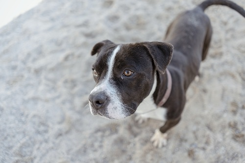 Athos is looking for a home.