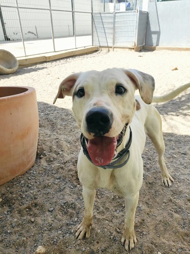 Bianca is looking for a home.