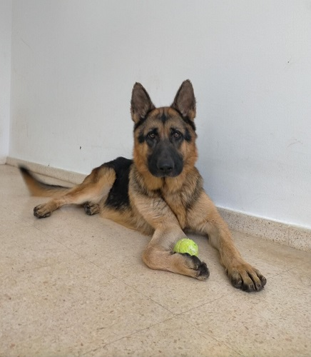 Bonzo is looking for a home.