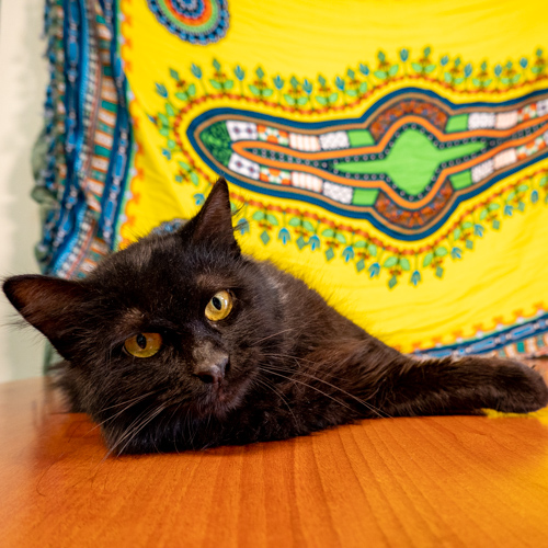 Bufa is looking for a home.
