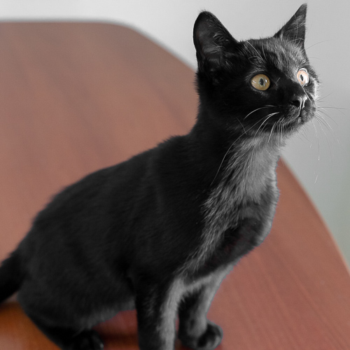 Carboncito is looking for a home.