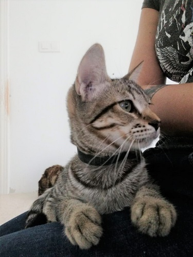 Conroy is looking for a home.