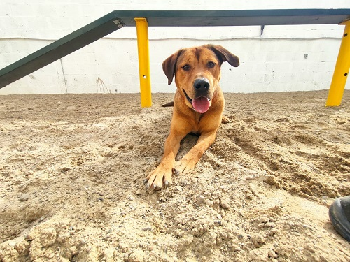 Duncan is looking for a home.