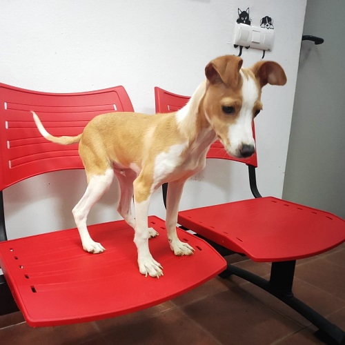 Jano is looking for a home.