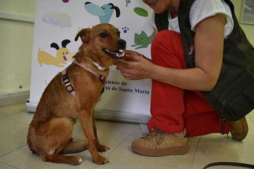 Luciana is looking for a home.