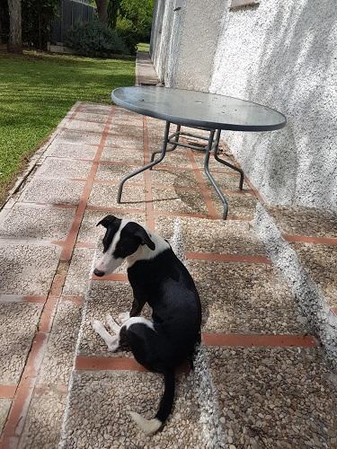 Misi busca un hogar.