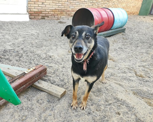 Negri is looking for a home.