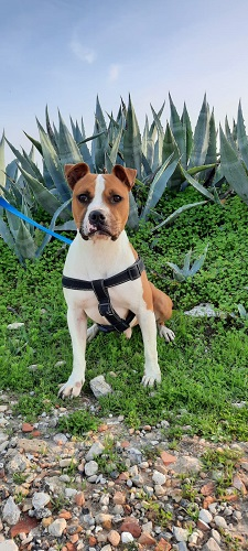 Pancito is looking for a home.