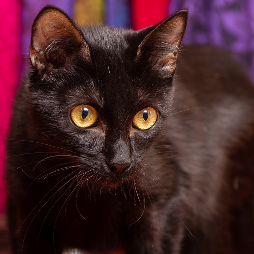 Wollen is looking for a home.