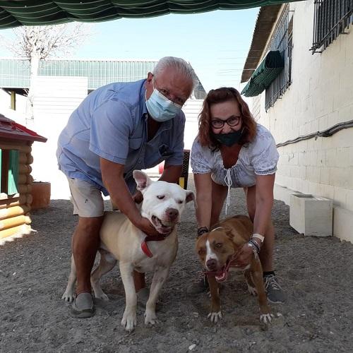 ¡Cheddar y Damiya adoptados!