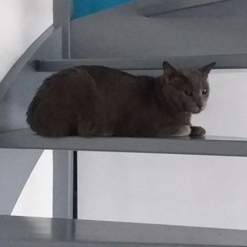 ¡León II adoptado!