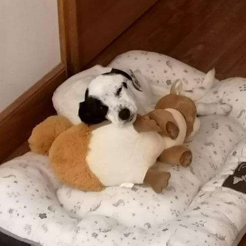 ¡Malky adoptada!