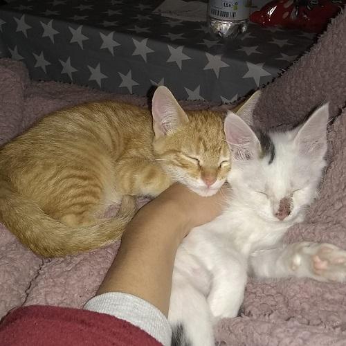 Mendi and Berma adopteds!