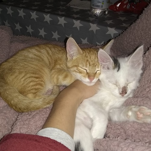 ¡Mendi y Berma adoptados!