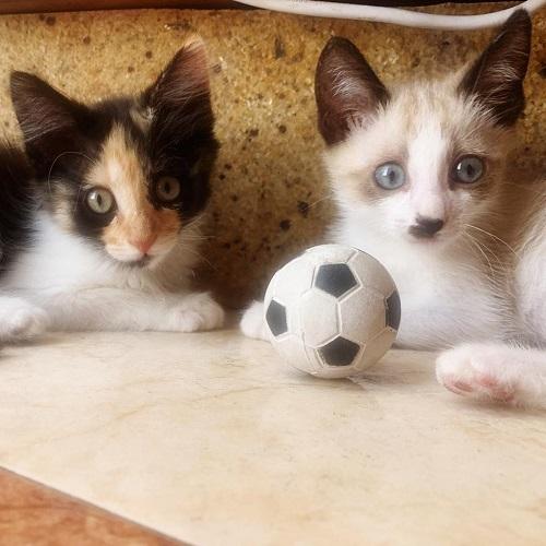 ¡Yael y Tanis adoptados!